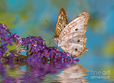 Dreamy Butterfly Art Print by Mimi Ditchie