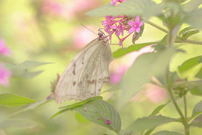 Photograph - Dreamy Butterfly by Vanessa Valdes