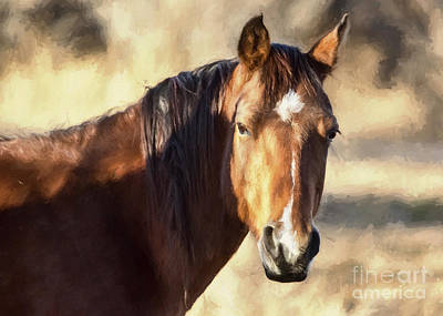 Forelock Photograph - Dreamy Colorado Mustang by Janice Rae Pariza