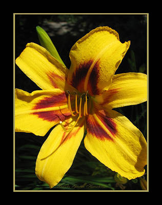 Daylily In Nature Photograph - Day Dreamy Lily by Brooks Garten Hauschild