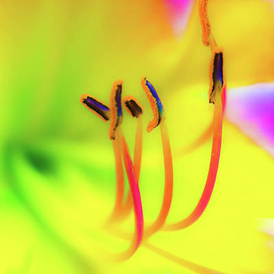 Photograph - Dreamy Daylily by Stewart Helberg