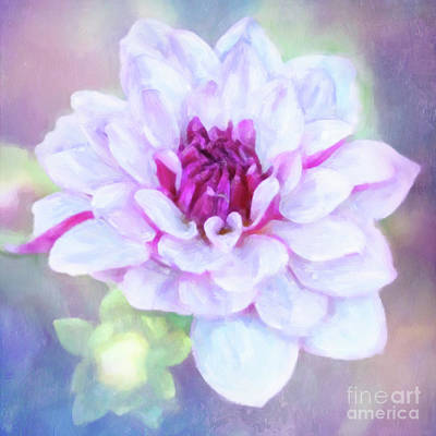 Photograph - Dreamy, Delightful Dahlia by Anita Pollak
