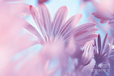 Photograph - Dreamy Floral Background by Anna Om