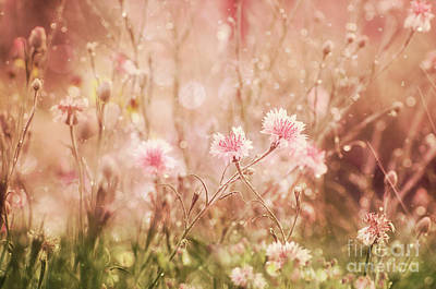 Photograph - Dreamy Flower Field by Jim And Emily Bush