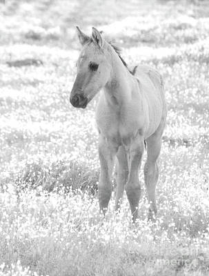 Photograph - Dreamy Foal In Flower Field by Jim And Emily Bush
