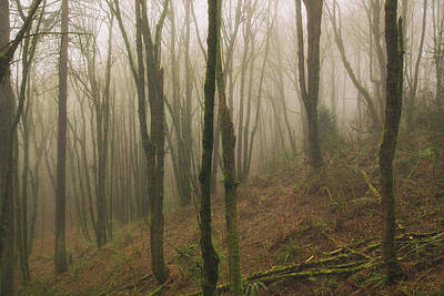 Photograph - Dreamy Forest by Kunal Mehra