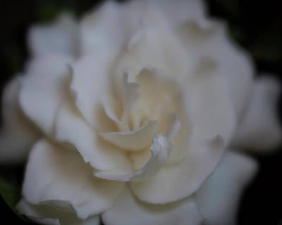 Photograph - Dreamy Gardenia by Teresa Wilson