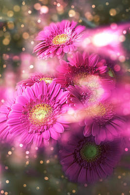 Gerbera Daisy Photograph - Dreamy Gerbera Daises by Garry Gay