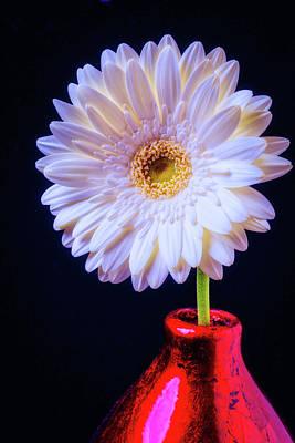 Gerbera Daisy Photograph - Dreamy Gerbera In Vase by Garry Gay