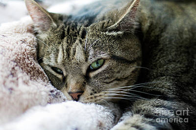 Photograph - Dreamy Gizmo by Terri Waters