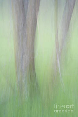 Photograph - Dreamy Green by Alice Cahill