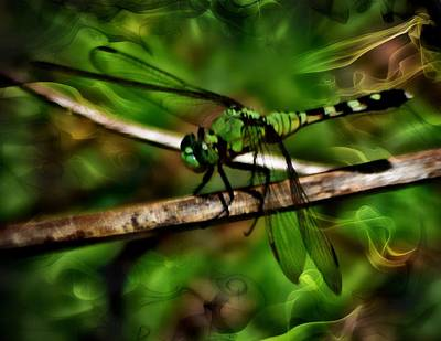 Photograph - Dreamy Green Dragonfly by Sheri McLeroy