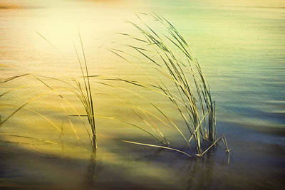 Photograph - Dreamy Lake Shore Reflections by Ann Powell