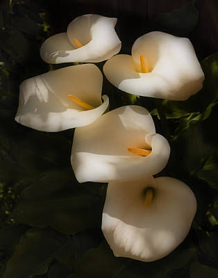 Photograph - Dreamy Lilies 2 by Mick Burkey