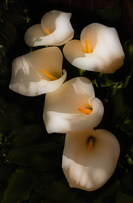 Abstract Shapes Janice Austin - Dreamy Lilies by Mick Burkey