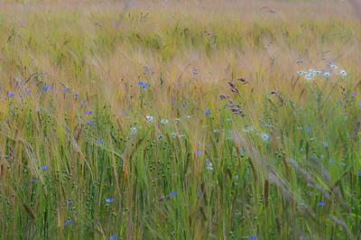 Photograph - Dreamy Meadow by Ian Thompson