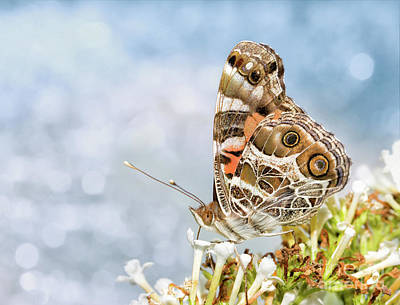 Photograph - Dreamy Painted Lady by Sari ONeal