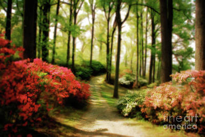 Photograph - Dreamy Path by Lois Bryan