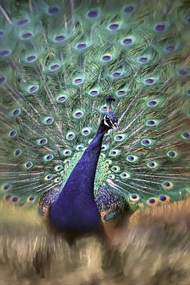 Photograph - Dreamy Peacock Bird Art By Jai Johnson by Jai Johnson