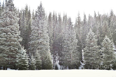 Art Print featuring the photograph Dreamy Pine Snow Forest Landscape by Andrea Hazel Ihlefeld