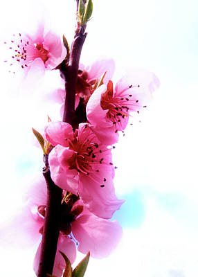 Photograph - Dreamy Pink Blossom by Nina Ficur Feenan