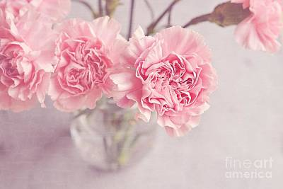 Floral Photograph - Dreamy Pink Carnations by Nikki Vig
