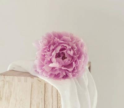 Photograph - Dreamy Pink Peony by Kim Hojnacki