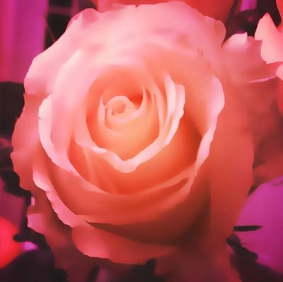 Photograph - Dreamy Pink Rose by Femina Photo Art By Maggie