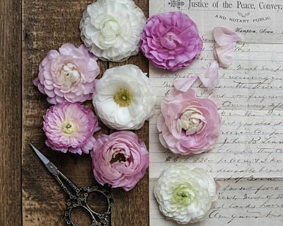 Photograph - Dreamy Ranunculus  by Kim Hojnacki