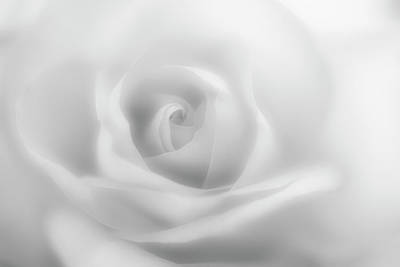 Photograph - Dreamy Rose In Monochrome by Vishwanath Bhat