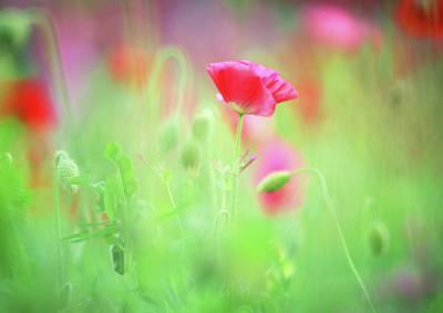 Landscape Digital Art - Dreamy Summer Meadow by Georgiana Romanovna
