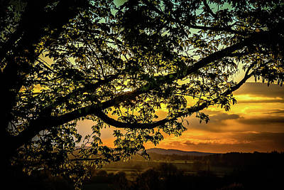 Photograph - Dreamy Tree by Holger Debek