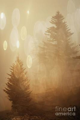 Photograph - Dreamy Trees by Debbie Green