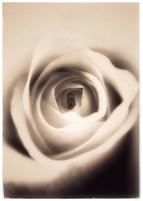 Photograph - Dreamy Vintage Rose by Nathan Little