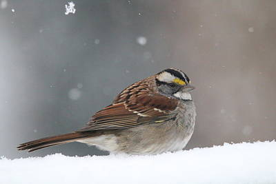 Photograph - Dressed For Snow by Living Color Photography Lorraine Lynch