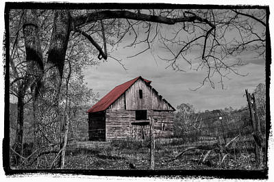 Tn Barn Photograph - Dressed In Red by Debra and Dave Vanderlaan