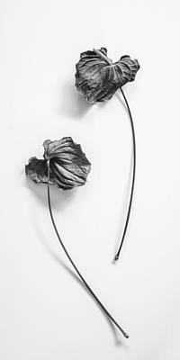 Photograph - Dried Anthurium Flowers - Mirror 1 by Alexander Kunz