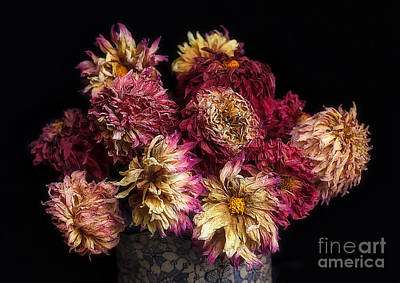 Photograph - Dried Dahlias From The Garden by Ann Jacobson