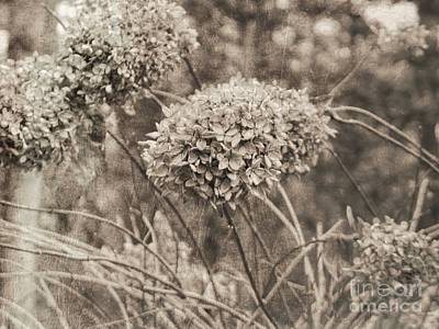 Photograph - Dried Flowers by Renee Trenholm