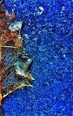 Photograph - Dried Leaf by Eddie G