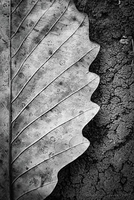 Photograph - Dried Leaf by Henri Irizarri