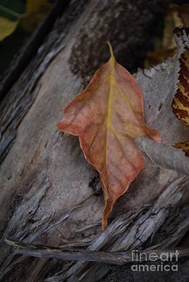 Photograph - Dried Leaf On Log by Heather Kirk