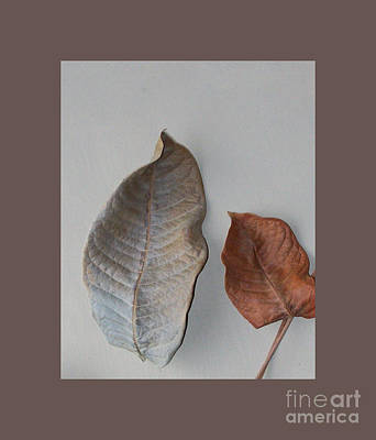 Dried Leaves In A Frame Art Print by Marsha Heiken