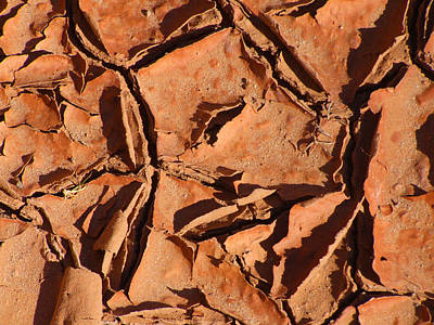 Nature Abstract Photograph - Dried Mud C by Mike McGlothlen