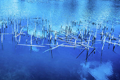 Photograph - Dried Reed Chunks In Water by Judith Barath
