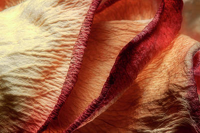 Abstracts Photograph - Dried Rose Petals I by Tom Mc Nemar