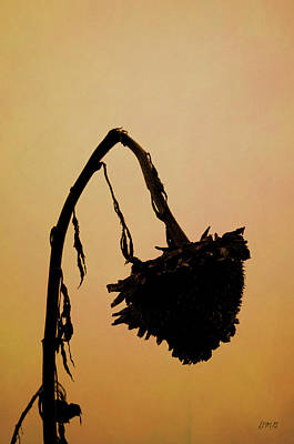 Photograph - Dried Sunflower by Dave Gordon