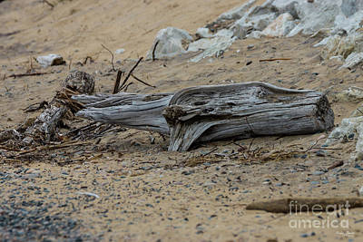Photograph - Drift Ashore by Jennifer White