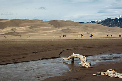 Photograph - Drift Wood And Dunes by Stephen Holst