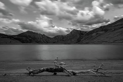 Photograph - Drift Wood Bw by Jonathan Nguyen